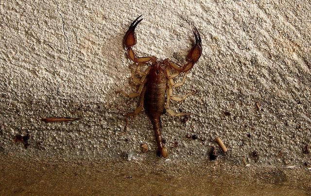 The scorpion stings but I do not