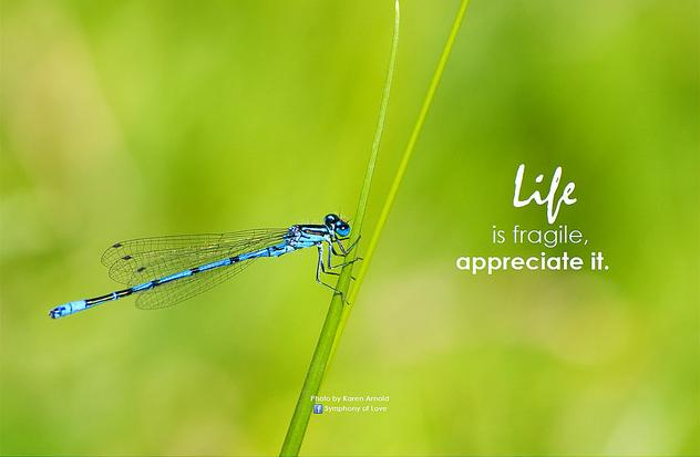 Life is fragile, appreciate it