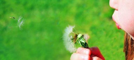 A girl blowing a dandelion
